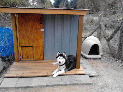 dog house for siberian husky husky dog home 171 siberian husky puppies for sale siberian