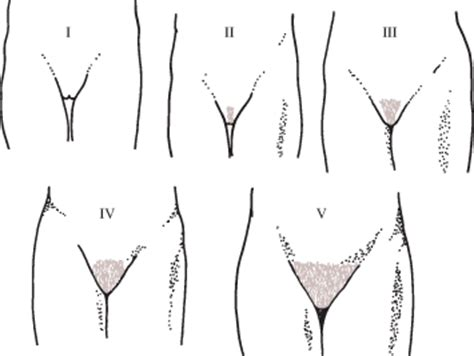 early young male pubic hair growth pictures female reproductive endocrinology gynecology and