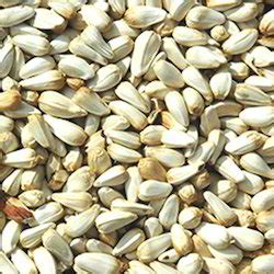safflower seeds nutrition nutrition ftempo