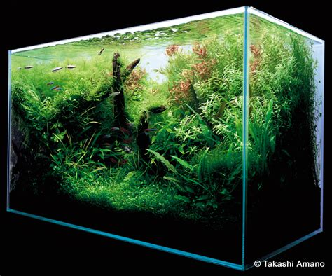 Aquascapes Com A Path To The Finished Aquarium By Takashi Amano