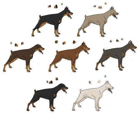 doberman pinscher colors 100 best dobbie images on doberman dogs