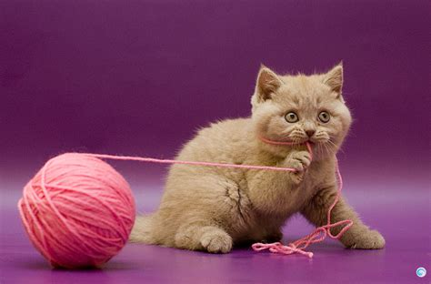 Cat String - animal cat photography string image 432434 on