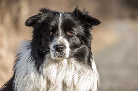 epilepsy expectancy the expectancy of epileptic dogs pets4homes
