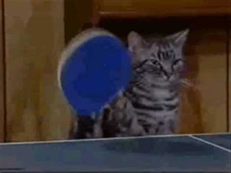 epic cat table ultimate cat ping pong youtube