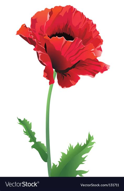 vector image poppy flower royalty free vector image vectorstock