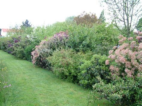 Cloture Vegetale Sans Entretien by Id 233 E De Jardin Cr 233 Er Une Haie Fleurie Et Parfum 233 E