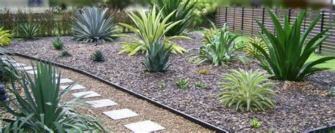 yucca agave plants landscaping garden design ideas succulents landscaping pinterest agave