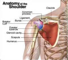 Shoulder blade pain and shoulder pain causes