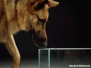 how dogs drink water 04 the