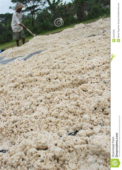 utilization  tapioca wastes editorial photo image