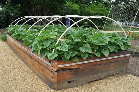 raised bed vegetable garden plans raised vegetable garden beds on concrete wood vs concrete