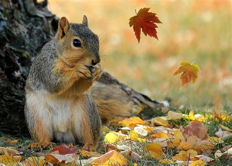 animal seasons squirrels autumn 1848358784 e2 hstead heath rainbow montessori co uk