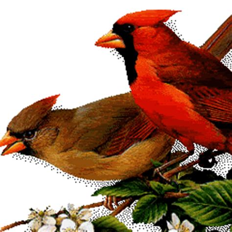 gif wallpaper for mobile free download download red animated birds animated mobile wallpaper