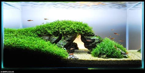 Japanese Aquascape Artist by Zen And The Of Fish Tank Maintenance Aquascapers