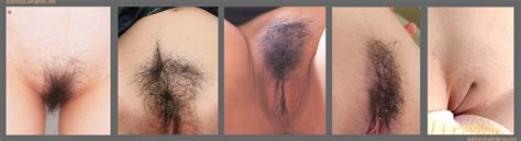 Pubic hairy pussy