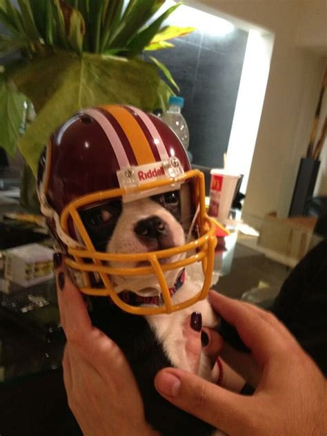 puppy helmet pin by cheryll coleman on animals