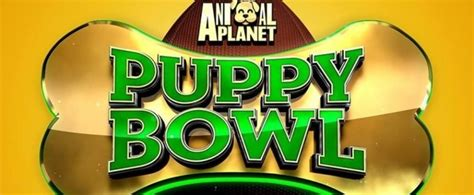 puppy bowl live how to puppy bowl 2018 live the vpn guru