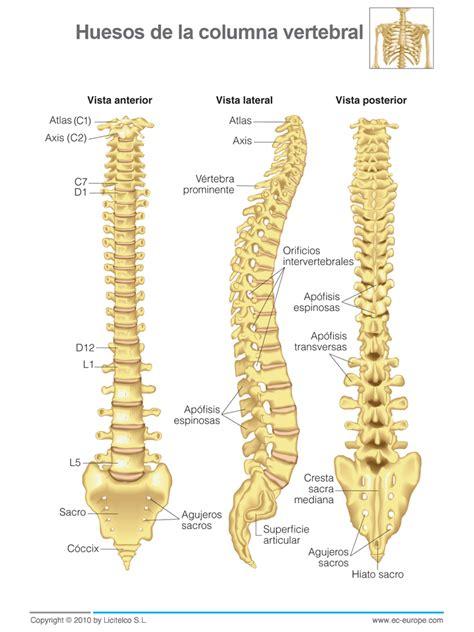 la columna de la 2 186 eso educaci 243 n f 237 sica sistema 211 seo el esqueleto humano