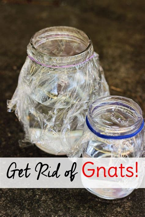 get rid of gnats in house the 25 best how to get rid of gnats ideas on pinterest
