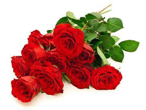 imagenes rosas hermosas rojas fotos de flores rosas rojas y arreglos florales