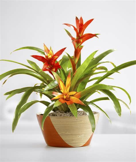 indoor flowering plants no sunlight 10 plants you can t kill no green thumb needed proflowers blog