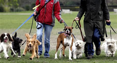 walking insurance walking insurance pet business insurance