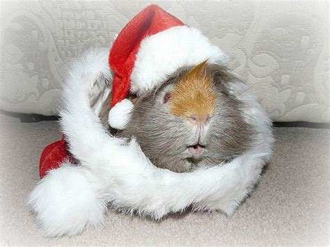 images of christmas animals funny and wild animals funny animals for christmas