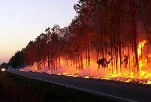 air quality suffers after forest fires