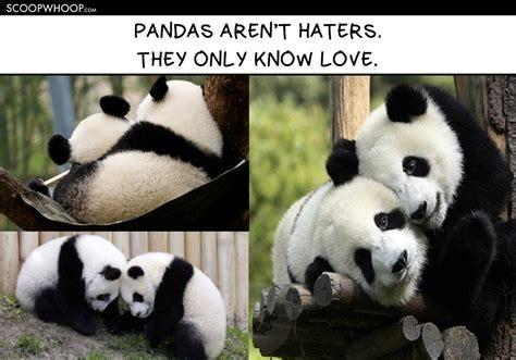 Panda Meme Mascara - panda makeup meme mugeek vidalondon