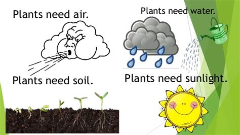 plants that need sunlight science unit 6 plants