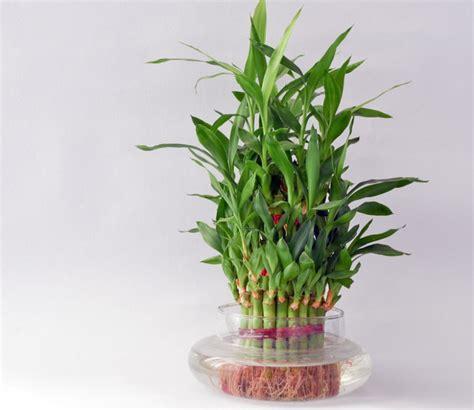 good houseplants 5 houseplants that bring good luck new england today