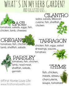 kitchen herbs creating a kitchen herb garden first home love life