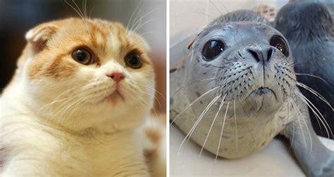 Kaos Einsten Humor morsomme katter som ligner p 229 noe annet enn katter