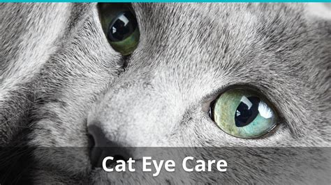 Eye Care What You Should 2 by Cat Eye Problems Care What You Should To Treat