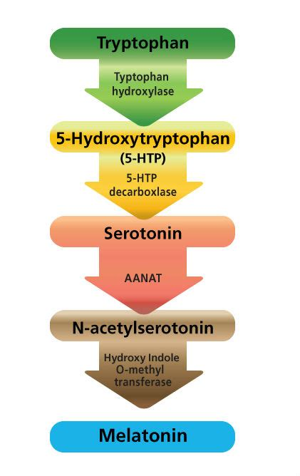 5 Htp And Gut Detox by Serotonin Our Happiness Hormone Alida Deligeorges