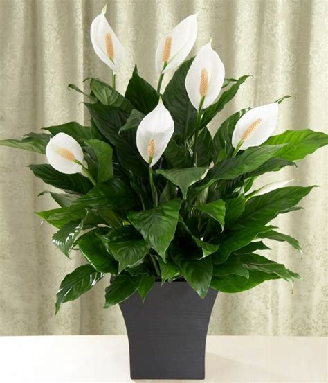 Bien Plante D Interieur Depolluante #3: Plante-verte-dintérieur-plantes-vertes-dépolluantes1.jpg