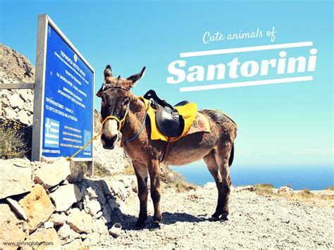 cute animals  santorini