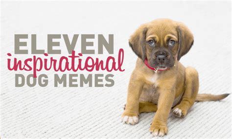 inspirational dog memes  cinema lightbox