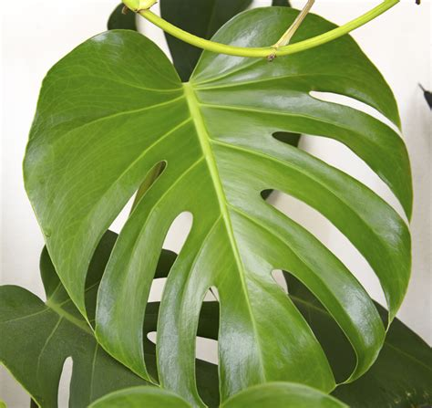 best indoor plants low light the best low light plants for indoors