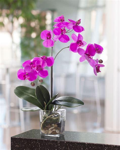 lifelike phalaenopsis silk orchid accent arrangements at