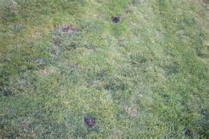 how to control moles in the yard ehow