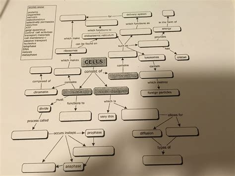 cell concept map answers solved word bank proteins organelles osmosis mitochondrio