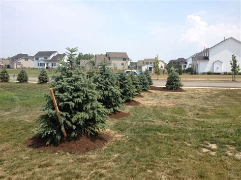 Landscape Barrier Tree Planting In Buffalo Ny Shrubs Trees And Landscape