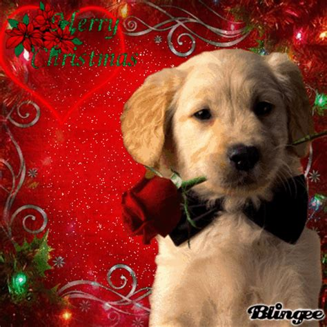 merry christmasdog picture  blingeecom