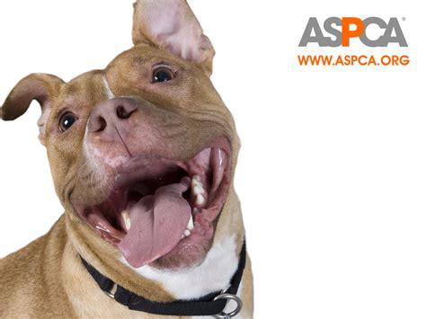 aspca dogs animal cruelty on emaze