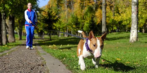 can dogs be bipolar bipolar pets the exercise companion bphope bp magazine community