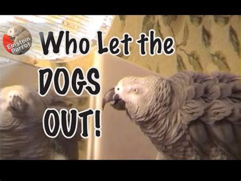 who sings who let the dogs out einstein sings quot who let the dogs out quot original