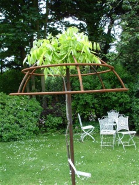 top 28 how to support wisteria planting guide for wisteria purple wisteria for sale online