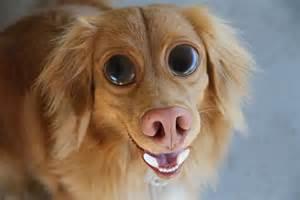 photoshop tutorial cs5 create funny dog face