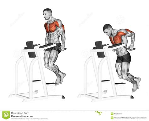 Machine Bench Press Vs Bench Press Exercising Dips In The Simulator Stock Illustration